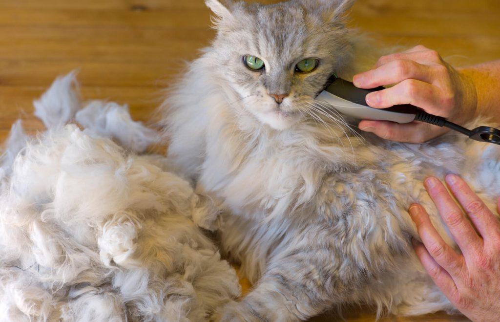 Iată, așadar, 10 metode de îngrijire a blănii la pisici: