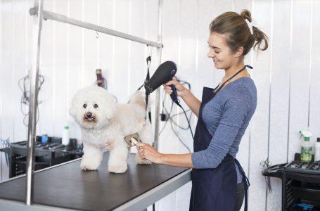 Avantajele unui salon canin