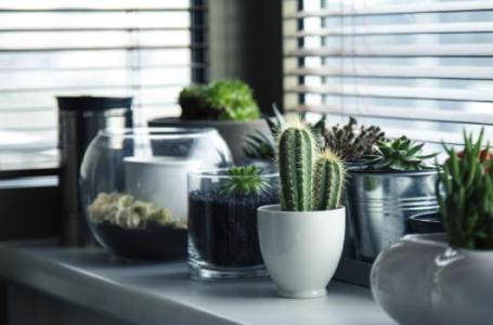 5 sfaturi pentru ingrijirea plantelor in ghiveci