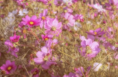 Ce spun astrele despre florile tale preferate?
